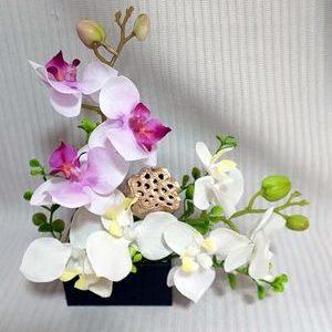 お花は胡蝶蘭で