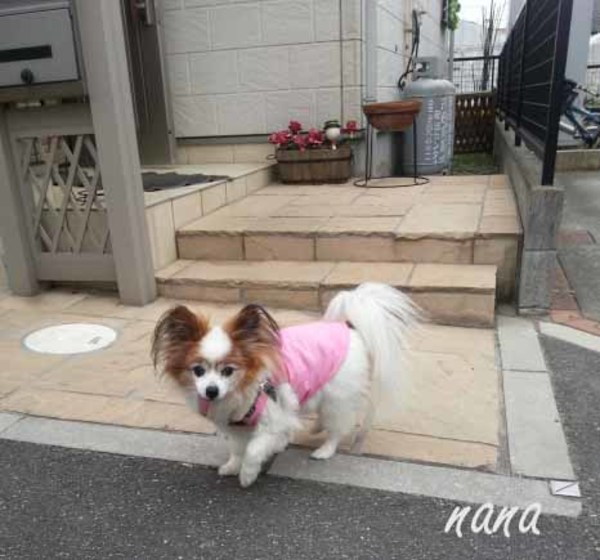 ナナとお散歩♪